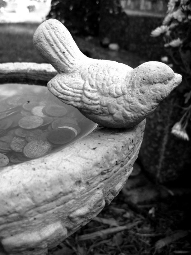bird-on-bird-bath-mt-venon-west-boylston-ma